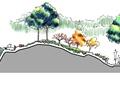 景观树,园路,驳岸