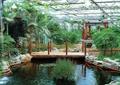 水景,栈道桥,栏杆,景石,水生植物