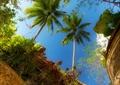 门廊,热带植物,植物墙