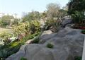 景石,景觀樹,花卉植物,公園景觀