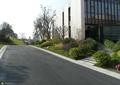 道路景观,灌木球,汀步,办公楼