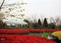 花池,花坛,种植池,景观水池