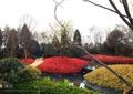 花池,花坛,种植池,灌木