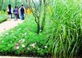 花卉植物,观赏草,园路,公园景观