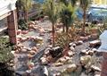 景观植物,景观水池,石头