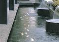 水体,水景,水池,水池景观,喷泉水景,喷泉水池景观,水景喷泉,池子,喷泉水池,喷泉景观