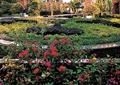 花坛,花池,种植池