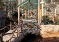 小区景观,住宅景观,玻璃亭,廊柱,拱桥,水景,栏杆