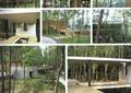 乔木,别墅景观,景观植物,植物,别墅建筑