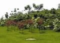 植物园,植物素材,棕榈植物,井盖,草坪