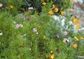 花卉植物,草本植物