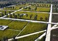 田地,稻田,园路,景观树,农业景观