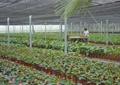 花圃,温室大棚,花卉植物