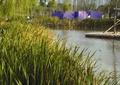水池水景,树池池塘,观赏草,挡墙,围墙