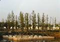 树池池塘,水池水景,草丛