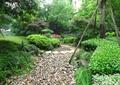 汀步,卵石铺装,树池,树池景观,乔木灌木