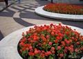 花坛,花坛坐凳,花卉植物,花池,花池坐凳,地面铺装