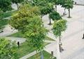 园路,草坪,景观树,小品,地面铺装,滨水景观