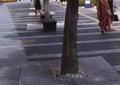 树池,树池盖板,地面铺装