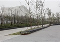 园路,地面铺装,景观树,草坪,花卉植物