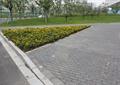 园路,地面铺装,种植池,花卉植物,草坪,景观树