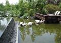 景观水池,滨水景观,石头,木栏杆