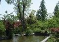 景观水池,乔木,植物造景