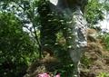 置石,花卉植物,灌木植物