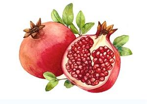 228张蔬菜水果绘制设计JPG图
