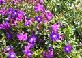 花卉植物,花池,草本植物