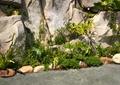 景石假山,假山,自然石,石头,地面铺装