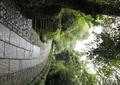 园路景观,地面铺装,景观树,台阶,村庄景观