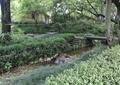 河流景观,石坪桥,景观树,草本植物,村庄景观