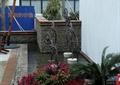 抽象小品,花卉植物,花卉盆景,水池水景,卵石駁岸
