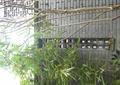 镂空景墙,竹林,景观树