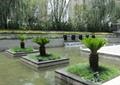 樹池,種植池,景觀樹,水池景觀,住宅景觀