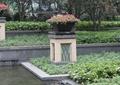 花钵,种植池,草本植物,花卉植物,住宅景观