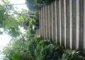 台阶,台阶踏步,楼梯,树池