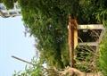 廊架,廊架柱,廊架坐凳,树池