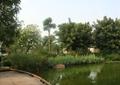 木平台,水体景观,景石,景观植物,住宅景观