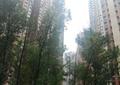 大乔木,住宅建筑,灌木丛,草坪,住宅景观
