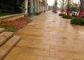 園路,地面鋪裝,種植池,花卉植物,臺階,樹池,景觀樹,住宅景觀