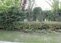 草坪,灌木叢,花卉植物,藤蔓植物,景觀樹,住宅景觀
