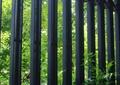铁艺围墙,景观植物