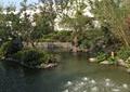 水池,驳岸景观,灌木丛植物,乔木植物