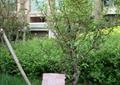 喬木植物,喬木灌木