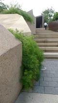 地灯,台阶,围栏栏杆,景墙