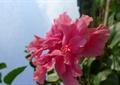 花卉植物,花朵,特写
