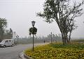 道路景观,道路绿化,道路铺装