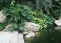 驳岸台阶,水体景观,假山石头